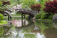 65021-03605 Bridge in Japanese Garden in spring, MO Botanical Gardens, St Louis, MO