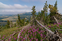 These colorful wildflowers were blooming near the top of Big Pryor Mountain.