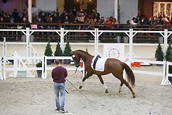 061 - Heros Begijnhoeve<br /> Hengstenkeuring BWP - Azelhof - Koningshooikt 2015<br /> ©  Dirk Caremans