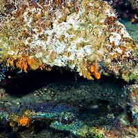 Heavily Encrusted Hull Plating, Oro Verde, Shipwreck, Grand Cayman