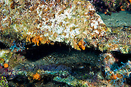 Heavily Encrusted Hull Plating, Oro Verde, Shipwreck, Grand Cayman