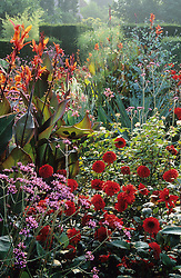 Dahlias and cannas in the exotic garden at Great Dixter. Planting includes Canna indica 'Purpurea', Dahlia 'Grenadier' and Verbena bonariensis