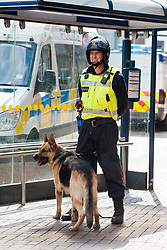 The English Defence League (EDL) return to Sheffield to lay flowers at Sheffield War Memorial . resulting in a police operationlasting over 5 hours involving Officers from Wales, South Yorkshire, Greater Manchester, West Yorkshire, Lancashire and Mersyside Police forces. A Police Dog Handler gives his dog some shade under a bus shelter during a lul in the operation <br /> 8 June 2013<br /> Image © Paul David Drabble<br /> www.pauldaviddrabble.co.uk