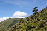African safari landscape with trees and plants. Photographed in the Ngorongoro Conservation Area, Tanzania
