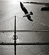 Aerial view of the Bay Bridge with seagull