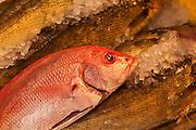 Fresh fish for sale, Chinatown, New York City.