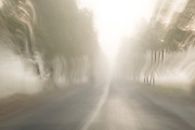 Trees and road in motion through fog, Pathein