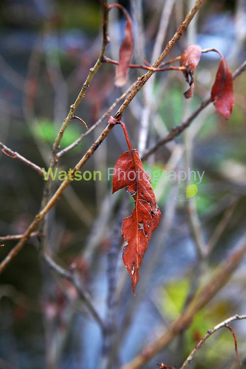 Spring Reveals Color Beyond Autumn