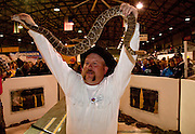 SWEETWATER, TX - MARCH 14: A Jaycees volunteer snake handler shows off a large western diamondback rattlesnake during the 51st Annual Sweetwater Texas Rattlesnake Round-Up, March 14, 2009 in Sweetwater, Texas. Approximately 24,000 pounds of rattlesnakes will be collected, milked for venom and the meat served to support charity. (Photo by Richard Ellis)