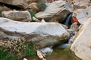 A hiker enjoys a waterfall at the First Palm Oasis, Borrego Palm Canyon, Anza-Borrego Desert State Park, California.  (model released)