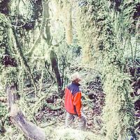 Cordillera Vilcabamba, Andes Mountains, Peru. Ben Wiltsie investigates upper Amazonian cloud forests on slopes of Cerro Victoria, above Rio Apurimac.