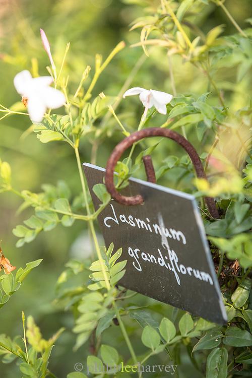 Handwritten sign showing Jasmine plant species, Grasse, France