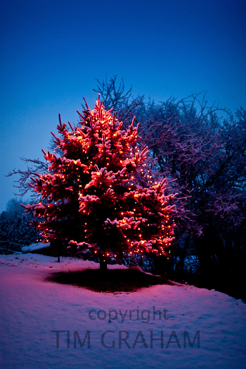 Christmas Tree with fairy lights in traditional snow scene in The Cotswolds, Swinbrook, Oxfordshire, United Kingdom