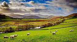 Misty autumn sunshine in the Tweed valley neat Broughton, Scottish Borders<br /> <br /> (c) Andrew Wilson | Edinburgh Elite media