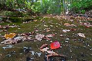 Kerhonkson, New York - Leaves on a dry stream bed at Minnewaska State Park during the Shawangunk Ridge Trail Run/Hike 32-mile race  on Sept. 20, 2014.