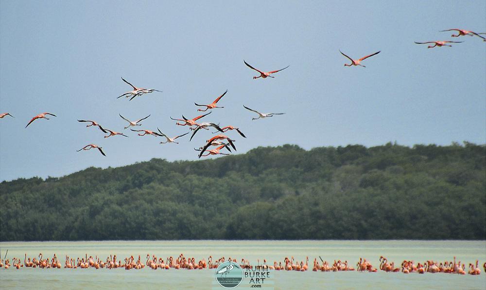 Exotic Water Birds