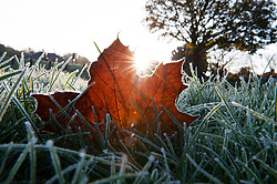 ©Licensed to London News Pictures 08/11/2019.<br /> Sidcup,UK. A freezing leaf,  Cold and frosty autumnal weather morning at Footscray Meadows in Sidcup, South East London. Photo credit: Grant Falvey/LNP