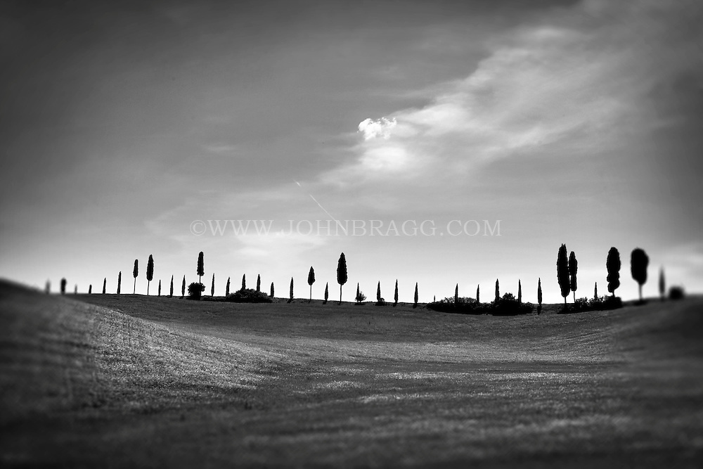 Black and white photo of a line of Cypress trees along the horizon of Tuscany, Italy.