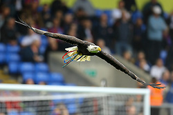 An eagle flys around Selhurst Park prior to kick off - Mandatory by-line: Jason Brown/JMP - 14/10/2017 - FOOTBALL - Selhurst Park - London, England - Crystal Palace v Chelsea - Premier League