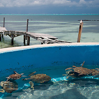 Tortugranja, or turtle farm on the Southern end of Isla Mujeres.  The farm cares for green sea turtles (Chelonia mydas) of all ages, from incubating eggs to exhibits for the adult turtles.  Isla Mujeres, Mexico, August 6 2009. (Photo/William Byrne Drumm)