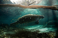 manatee habitat in Florida