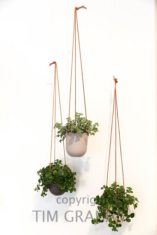 Minimallst ceramics planters by designer craftsman Ditte Fischer in shop, Laederstraede in Copenhagen, Denmark
