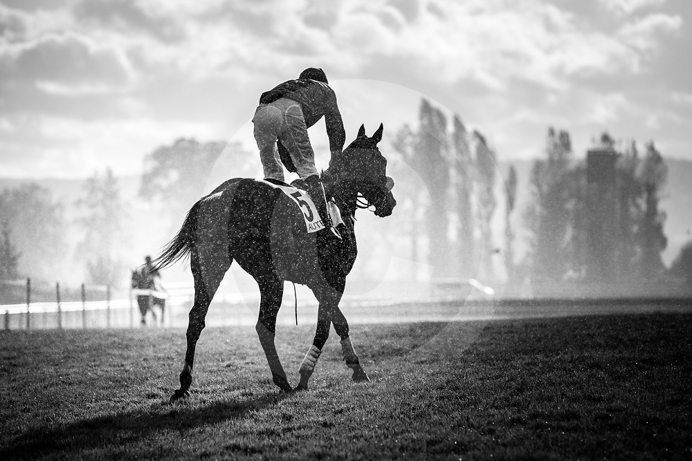 On The Go (J. Revely) wins Prix Maurice Gillois - Grand Steeple-Chase de 4 Ans, Gr.1, Steeplechase, Auteuil, France 05/11/2017, photo: Zuzanna Lupa