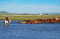 Mongolie, Ovorkhangai, vallee Orkhon, nomade avec son troupeau // Mongolia, Ovorkhangai province, Okhon valley, nomad with horses