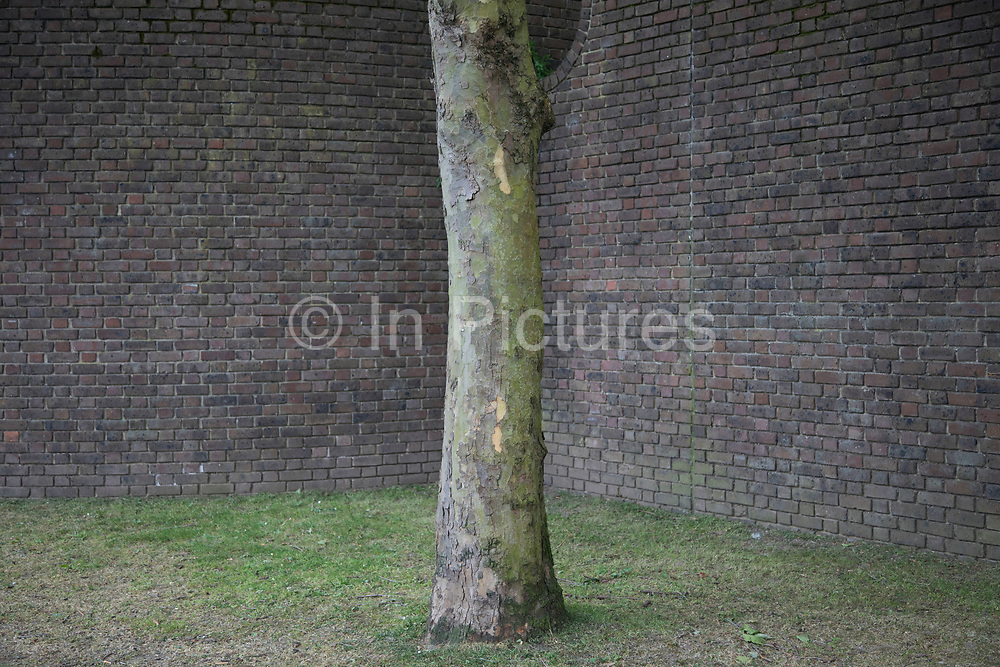 Texture of tree trunk bark and a very old brick wall in London, England, United Kingdom.