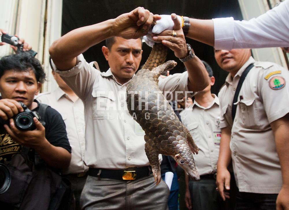 wildlife trade, wildlife markets, wildlife crime, wildlife market, pangpolins,
