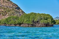 mangrove linapacan island in Palawan Philippines