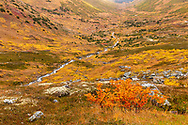 Fall colors of Palmer Creek Valley in Southcentral Alaska. Afternoon.