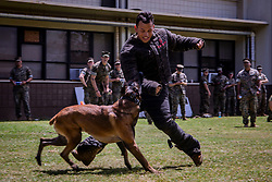 March 28, 2019 - Marine Corps Base Hawaii, Hawaii, U.S. - Dino, a military working dog (MWD) with the Provost Marshals Office, Marine Corps Base Hawaii (MCBH), brings down U.S. Marine Corps Lance Cpl. Johnanthony Anayaburgos, a rifleman with 2nd Battalion, 3rd Marine Regiment, during a demonstration of the installations MWDs, MCBH, Mar. 28, 2019. The MWDs capabilities were presented to U.S. Marine Corps riflemen to have a better understanding of working alongside a K-9 unit in a deployed environment. (Credit Image: © U.S. Marine Corps/ZUMA Wire/ZUMAPRESS.com)