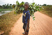 A boy who doesn't know his age and doesn't attend school carries a bunch of leaves in the town of Faye, Bas-Sassandra region, Cote d'Ivoire on Monday March 5, 2012.