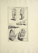 woodcut print of Human Anatomy from Anatomia per uso et intelligenza del disegno printed in Rome in 1691