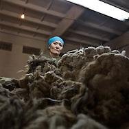 Mongolia. Gobi cashmere factory, the largest cashmere factory in . checking and sorting raw cashmere. The nomads are bringing the raw cashmere directly to the factory. a bag of 30 kilos is paid nearly 1000 us$  Ulanbaatar   /   Gobi cachemire , la plus grande societe et usine de cachemire en Mongolie. verification et tri  la laine .  Les nomades apportent directement la laine a l'usine, un sac de 30 kilos est paye environ 1000$,   Oulan Bator - Mongolie