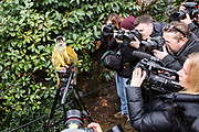 Photographers gather to photograph one of the Spider monkeys. The ZSL London Zoo Annual Stocktake 2015. Responsible for the care of more than 750 different species, keepers face the formidable task of noting every mammal, bird, reptile, fish and invertebrate at the Zoo.