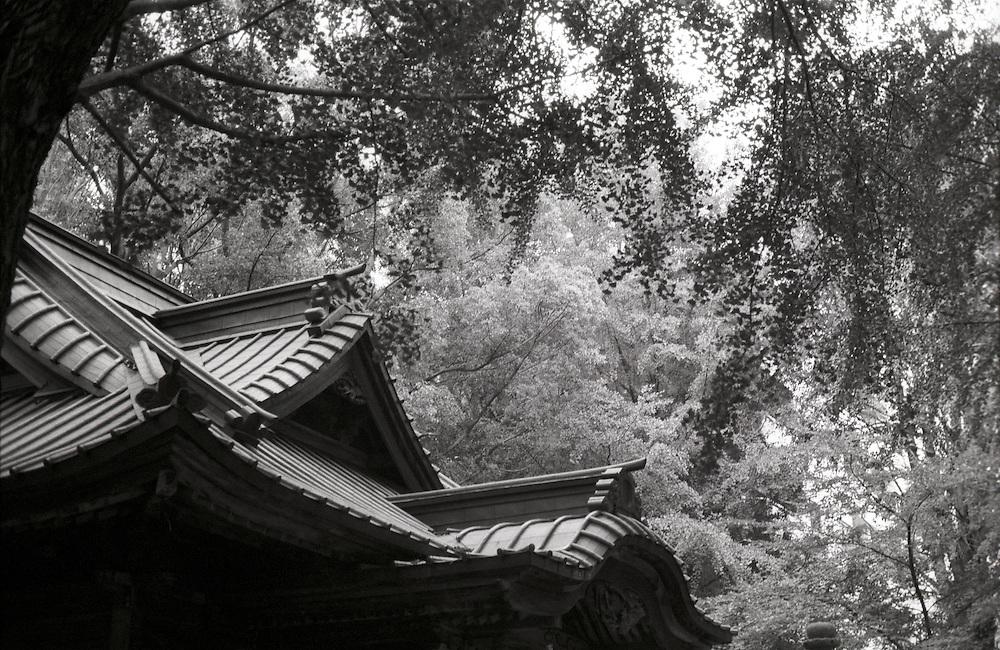 Wind rustles the leaves at Tanashi Jinja Shinto Shrine West Tokyo City, Tokyo, Japan.