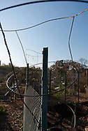 Wire plant frames and fence in a community garden. WATERMARKS WILL NOT APPEAR ON PRINTS OR LICENSED IMAGES.