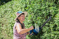 Senior woman is cutting hedge with a hedge trimmer in garden, Altoetting, Bavaria, Germany