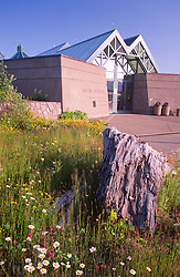 Wildflowers at Coldwater Ridge Visitor Center, Mt. St. Helens National Volcanic Monument, Washington, US