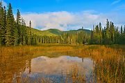 Reflection in marsh along the boardwalk leading to the Liard River Hot Springs. Northern Rocky Mountains<br />Liard River Hot Springs Provincial Park<br />British Columbia<br />Canada
