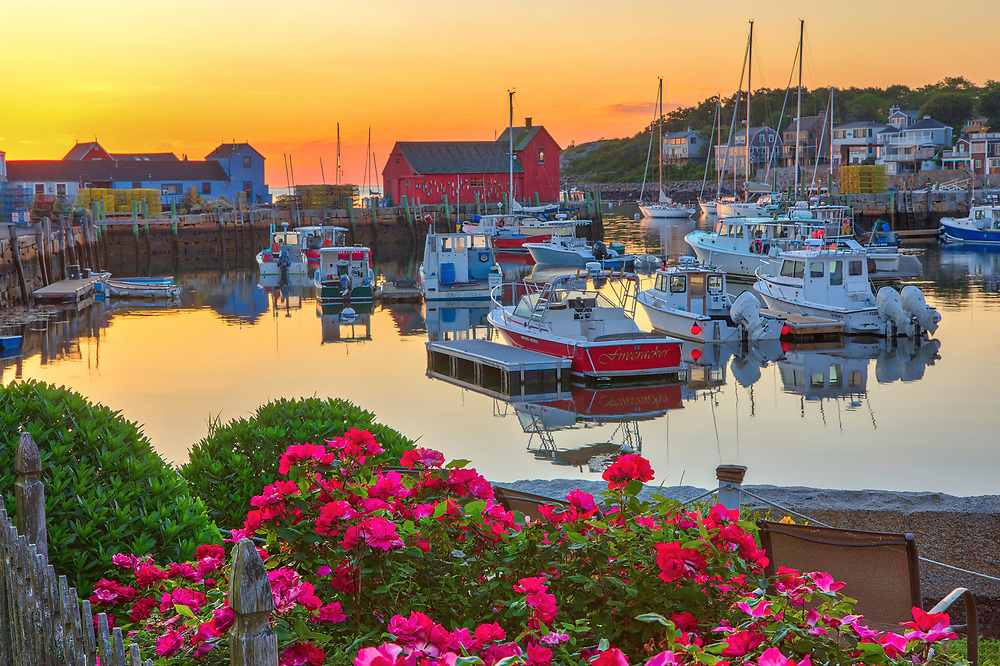 New England harbor scenery of Motif Number One, fishing boats and blooming rose flowers during at dawn in Rockport Harbor on Cape Ann, Massachusetts.