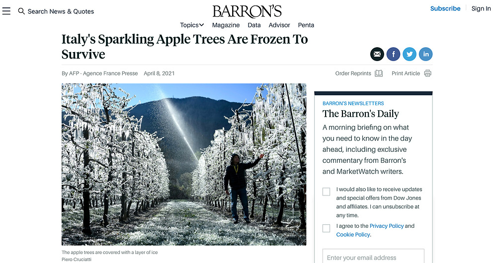 https://www.barrons.com/news/italy-s-sparkling-apple-trees-are-frozen-to-survive-01617894315?tesla=y