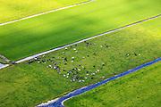 Nederland, Utrecht, Gemeente Woerden, 15-07-2012; polder Geverscop, onstaan door cope ontginning van het veen. Koeien in de wei. .Polder created by peat extraction. Dairy cows in the meadow..luchtfoto (toeslag), aerial photo (additional fee required).foto/photo Siebe Swart