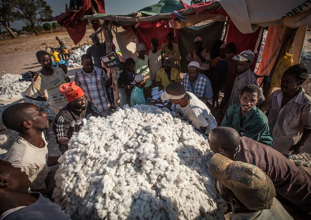 Farmers lift a large bundle of raw cotton onto a set of scales to be weighed by an agent of the ginning mill that buys the cotton from the farmers.
