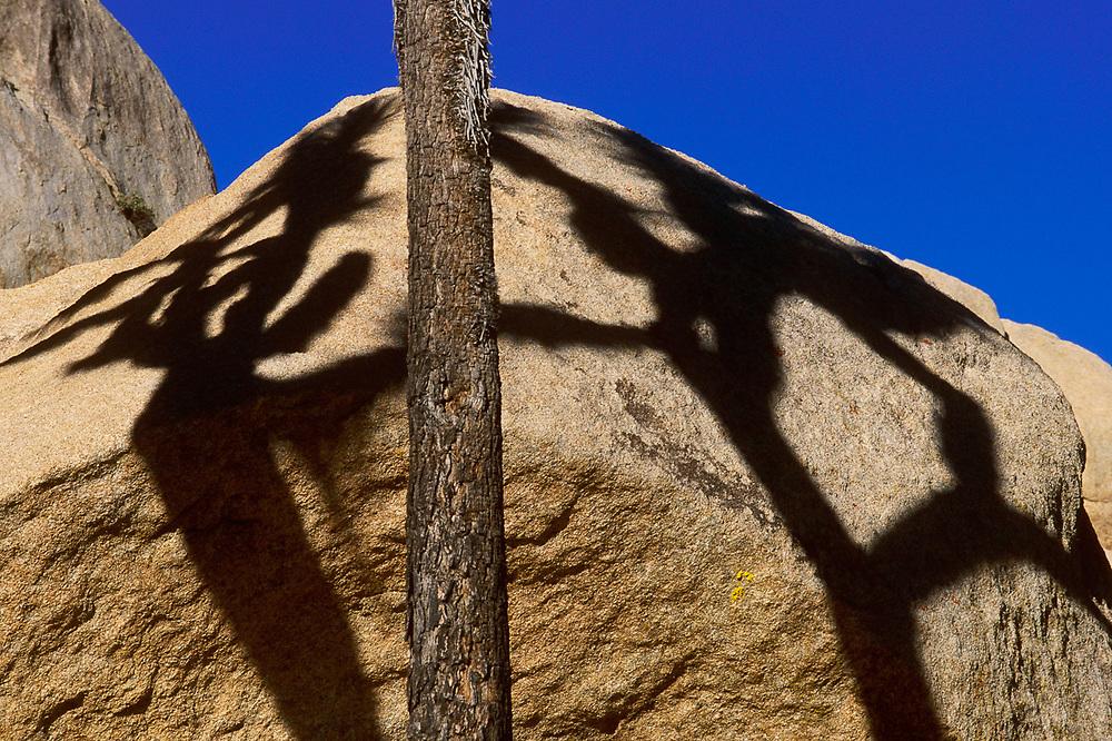 Lost Horse Valley shadows, morning light, March, Joshua Tree  National Park, California, USA
