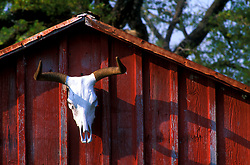 top of a red barn with a longhorn skull