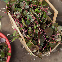 Fresh herbs for sale at a morning vegetable market in Thanh Toan village outside of Hue, Vietnam.