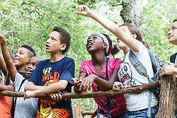 Kids on bridge, pointing at bird in forest, Dogwood Canyon Audubon Center, Cedar Hill, Texas, USA.